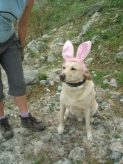 """Max """"Easter Bunny"""" Harrison"""